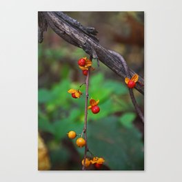 Dangling the Day Away Canvas Print