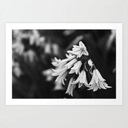 Tiny Bells of White Art Print
