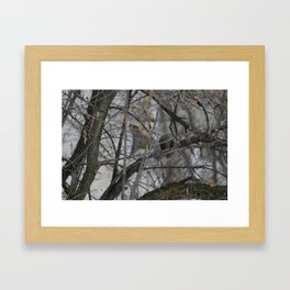 Squirrel !  Framed Art Print