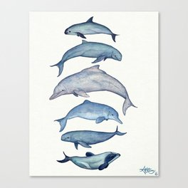"""Rare Cetaceans"" by Amber Marine - Watercolor dolphins and porpoises - (Copyright 2017) Canvas Print"