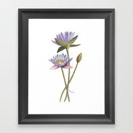 Lotus flowers Framed Art Print