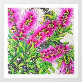Callistemon Art Print