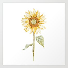 Sunflower 01 Art Print