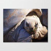 tortoise Canvas Prints featuring Tortoise by Jenna Boettger Boring