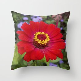 Red zinnia - blazing ring of fire Throw Pillow