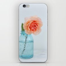 Rose in a Jar iPhone & iPod Skin