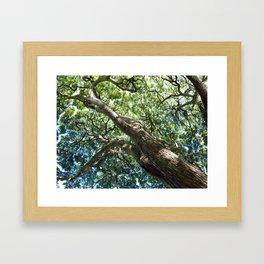 waimea tree Framed Art Print