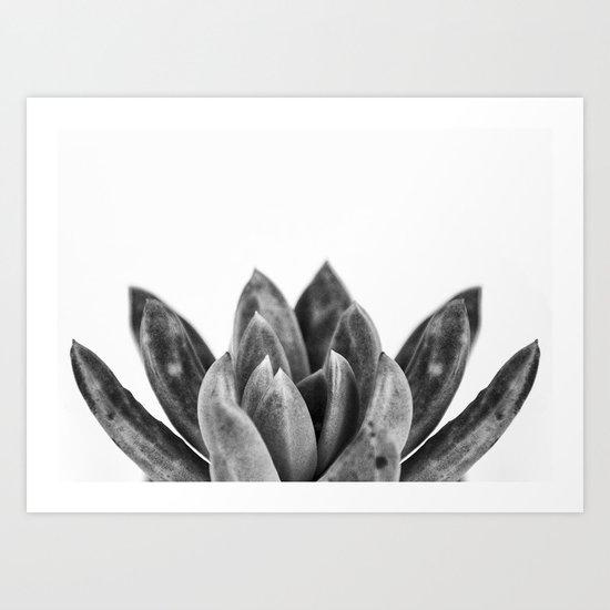 nature cactus macro Art Print