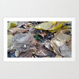 Fallen Nest Art Print