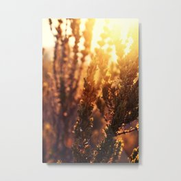 The sunset is golden Metal Print