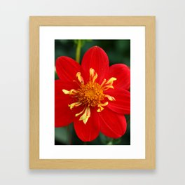 Autumn Beauty Framed Art Print