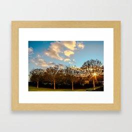Getty Trees Framed Art Print