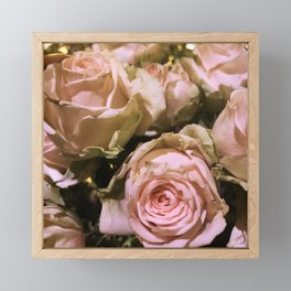 Shabby Chic Soft Peach-Pink Roses Framed Mini Art Print
