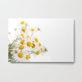 Many white flowerheads of chamomile bunch Metal Print