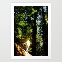 Redwoods I Art Print