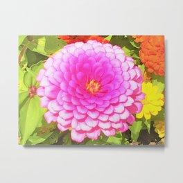Pretty Round Pink Zinnia in the Summer Garden Metal Print