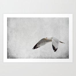 Winter's Return - Seagull Art Print