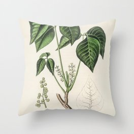 Poison ivy (Rhus toxicodendron)  from Medical Botany (1836) by John Stephenson and James Morss Churc Throw Pillow