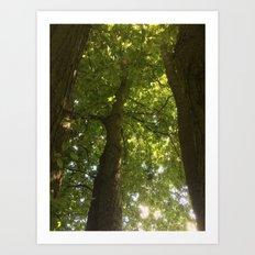 Beneath the Trees Art Print