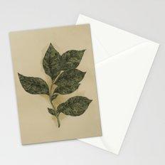 Basil Stationery Cards