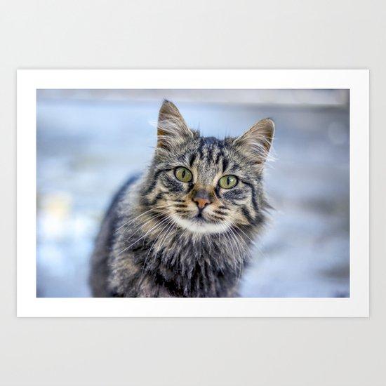 Cat Eyed Art Print