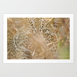 Leopard in the Grass Art Print
