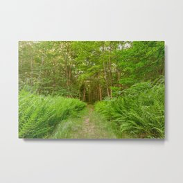 Summer Fern Trail Metal Print