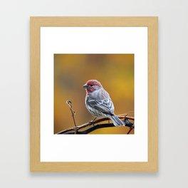 Fall Finch Framed Art Print