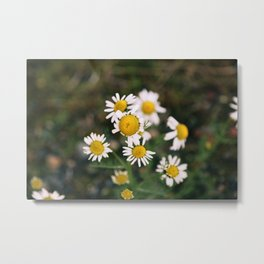Flower Photography by Brendan Hollis Metal Print