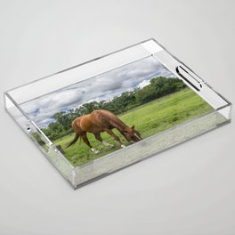 Brown Horse with White Blaze Grazing in a Ranch Pasture Acrylic Tray