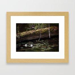 Water Lilies 001 Framed Art Print