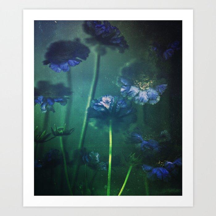 Scabious Blue Art Print