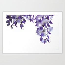 wisteria II Art Print