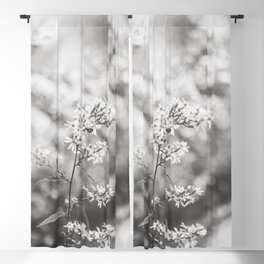 Aster - Flower Photography Blackout Curtain