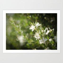 Bright Day, Tiny Flower Art Print