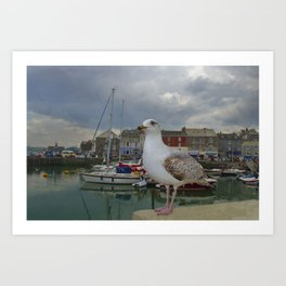 The Padstow Seagull, Padstow, Cornwall, UK Art Print