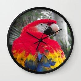 Majestic Macaw Wall Clock