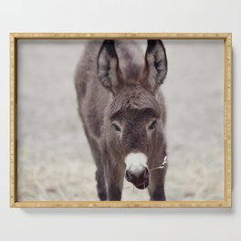 Young donkey mule eating, close up Serving Tray