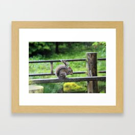 Nuts 'Bout Nuts Framed Art Print