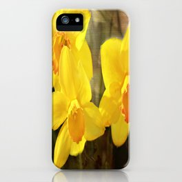 Yellow Trumpets - Daffodils iPhone Case