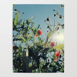 poppy flower no14 Poster
