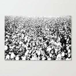 INDIAN COTTON Canvas Print