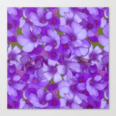 Purple Oxalis Canvas Print