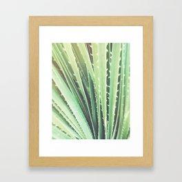 Palm Springs cactus plant California Framed Art Print
