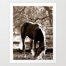 Sepia Horse  Art Print