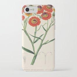 Helenium Atropurpureum Vintage Botanical Floral Flower Plant Scientific Illustration iPhone Case