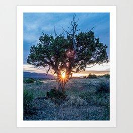 Sun Tree Hammock // Grainy Night Sunset Rays Hiking Landscape Photograph Wilderness Beauty Art Print