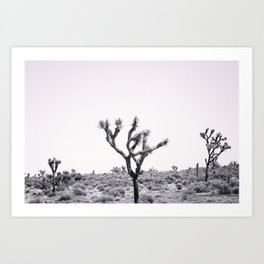Joshua Tree Monochrome, No. 2 Art Print