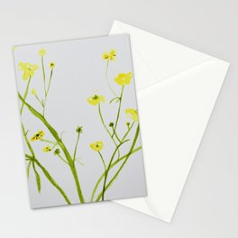 Icelandic Buttercup Stationery Cards