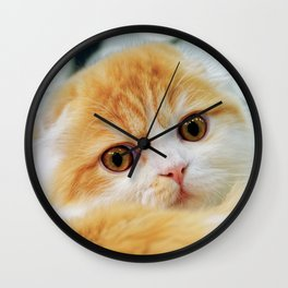 Young Scottish Fold cat Wall Clock